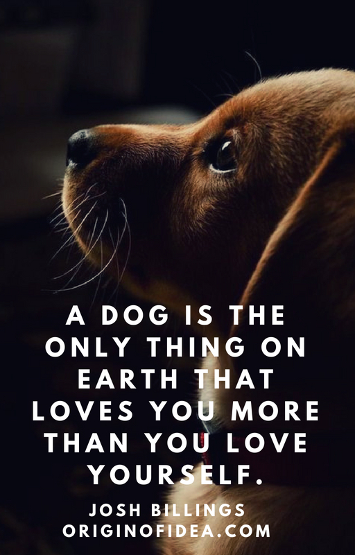 Love Quotes - A dog is the only thing on earth that loves you more than you love yourself.